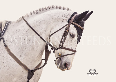 2021 Jan 22- World Equestrian Center