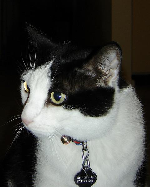 2007 06 22 - Cats 14.jpg
