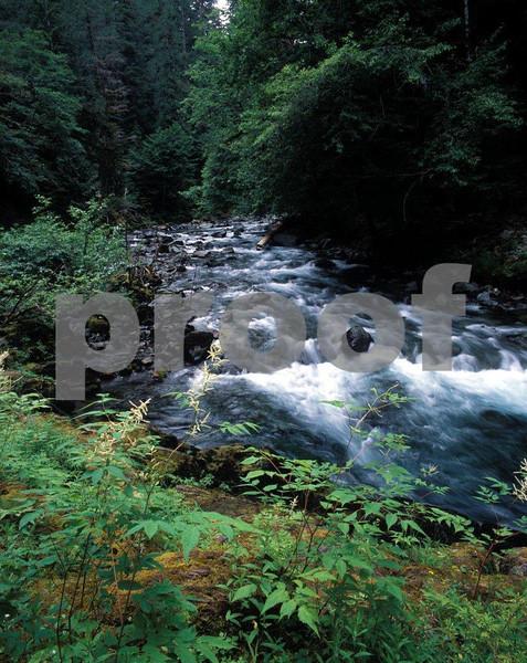 Skokomish River in Washington State.
