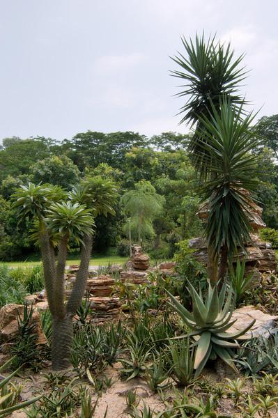20090901_3173 desert plants outside the enclosures