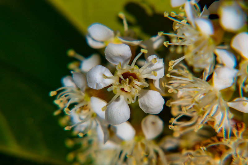160417_6321 Flowers_21-1.jpg