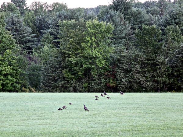 Vermont Wildlife