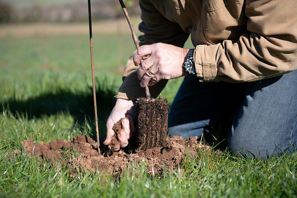Ken Wright @ Bonnie Jean planting