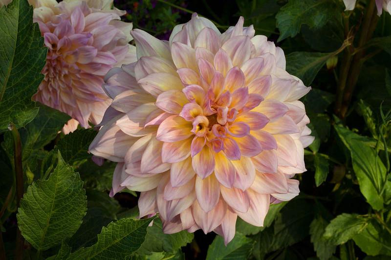 Botanicgarden11 228.jpg