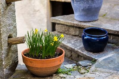 The Four Seasons: Spring