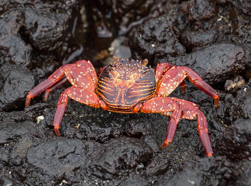 Galapagos_MG_4138.jpg