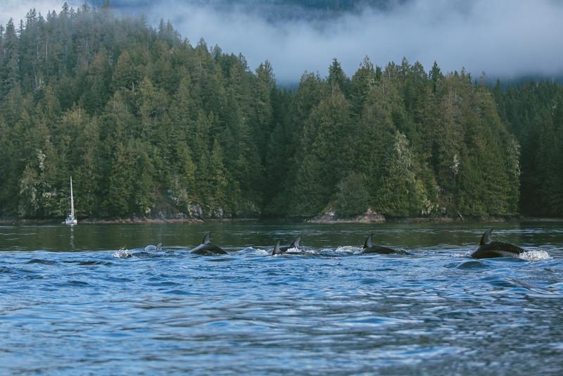 150910_Dolphin_3968.jpg