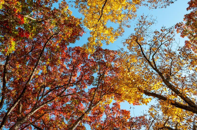 Fall_20201008_095342.jpg