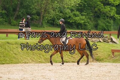 Pleasure Horse or Pony Under Saddle