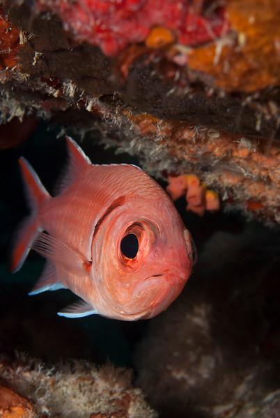 2011-Bonaire-11.jpg