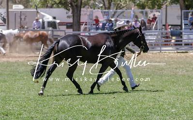 Glen Innes Ag Show - Stock Horses