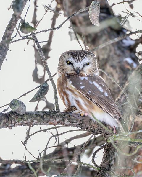 Owl Woods Nature Reserve, Ontario, Canada