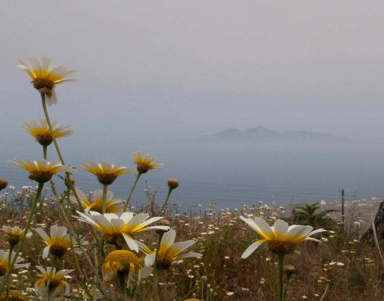 In the Mist.jpg