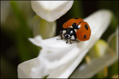 Nature - Bugs