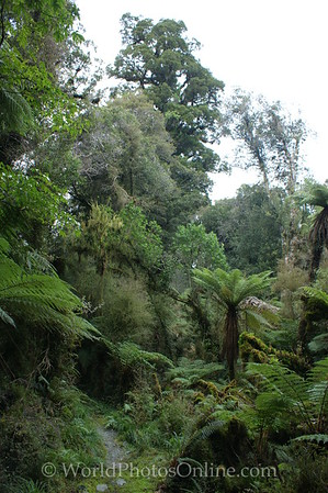 Te Wähipounamu Park