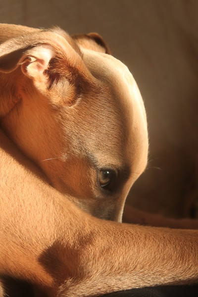 Dog Photographer of the Year 2011