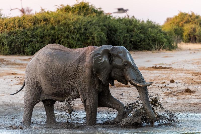 Botswana_June_2017 (4250 of 6179).jpg