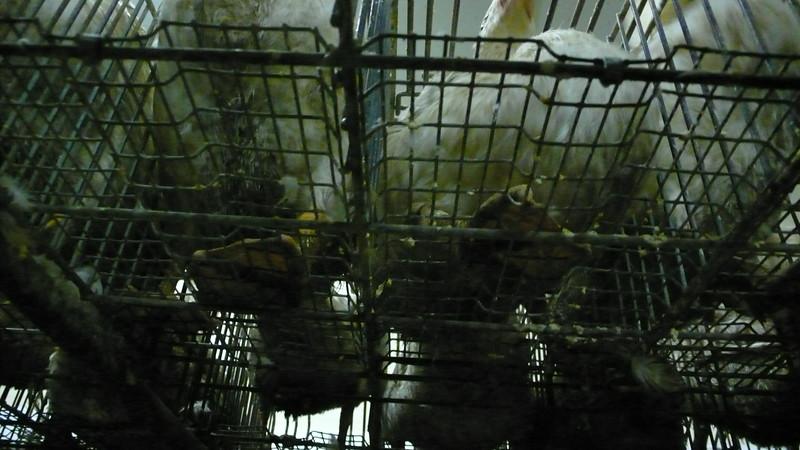 canards-foie-gras-2008-fr-B-014.jpg
