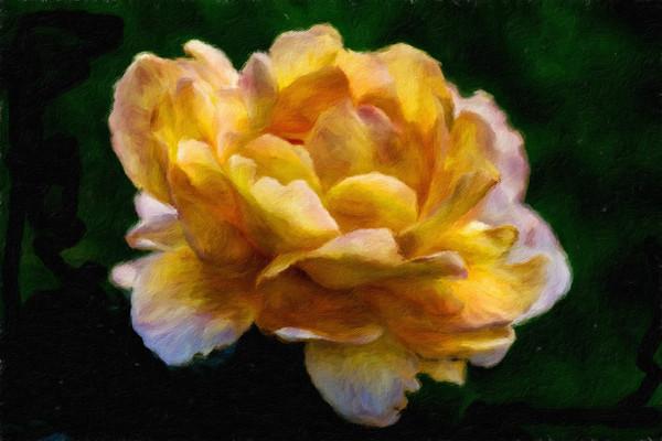 June 2 - Yellow rose with purple fringe.jpg