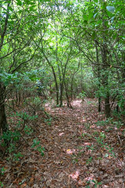Green Mountain Trail -- 4,050'