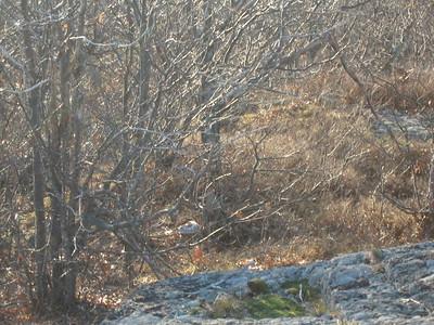 Mt Roberts - Bev LaFoley