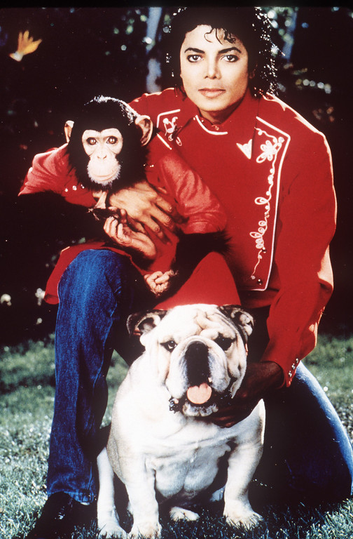 . Michael Jackson is seen in this undated photo with his pet chimp Bubbles and a bulldog.  (AP Photo/File)