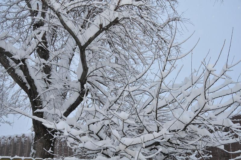 2012-12-09 First Snow of the Year - Sleeding 007.JPG