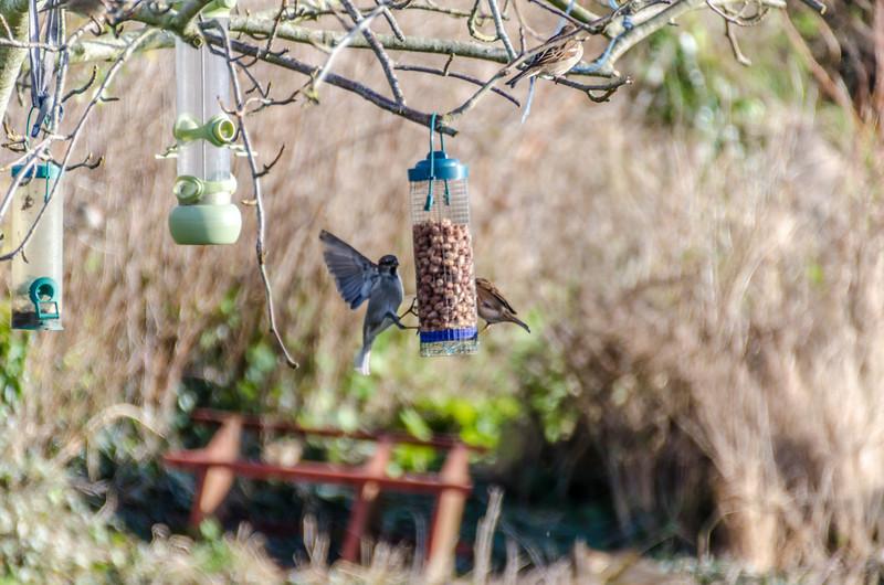 Birds 180118-56.jpg