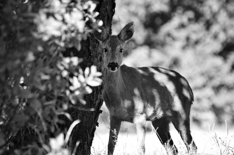 wildlifesweden (19).JPG