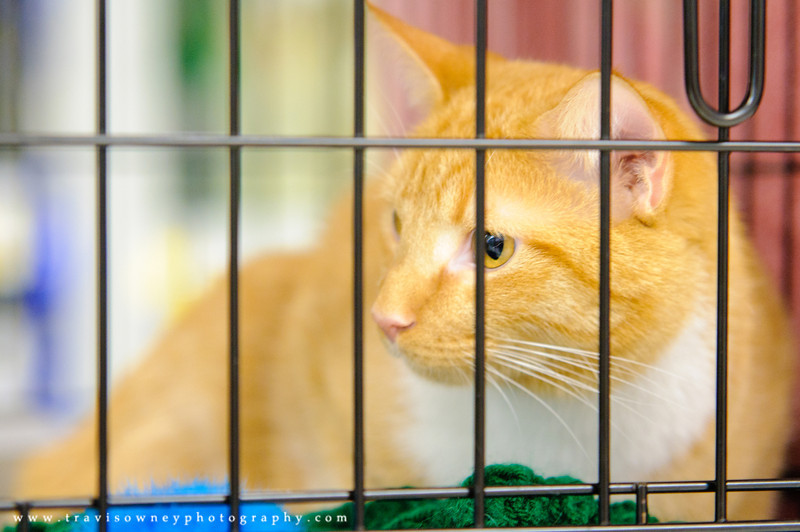20110514 PetSmart Adoption Event-80.jpg