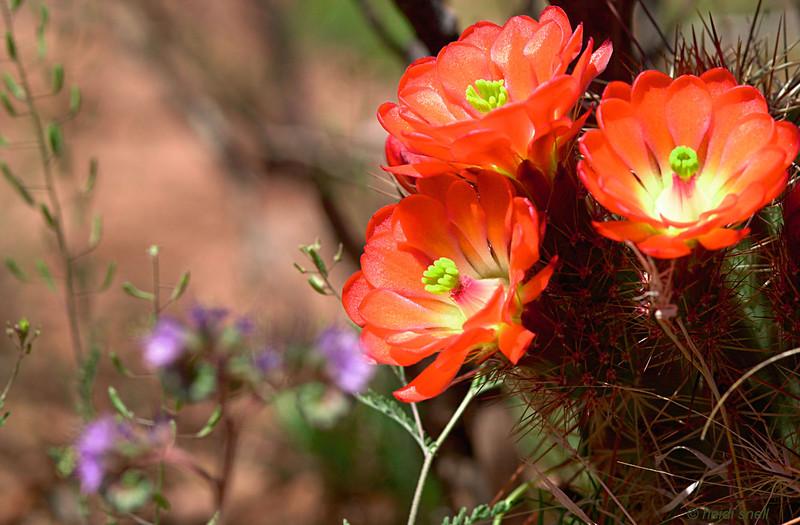 Tierra Grande, New Mexico