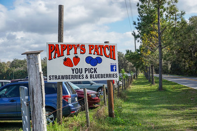 Pappy's Patch