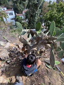 2021.04.24 Cactus Harvest