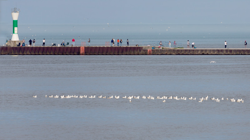 ... and then even more gulls -- lined up as with a ruler.
