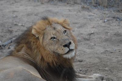 7-17-2015 Leopard Hills - Last Day