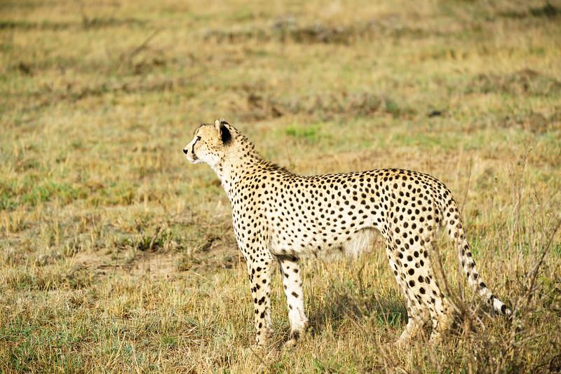 LeopardHills-20171022-0239.jpg