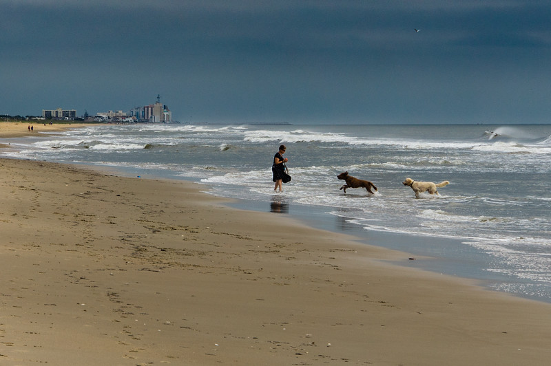 Dogs Playing in the Surf