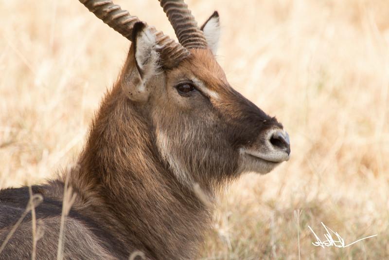 AntelopeS-16.jpg