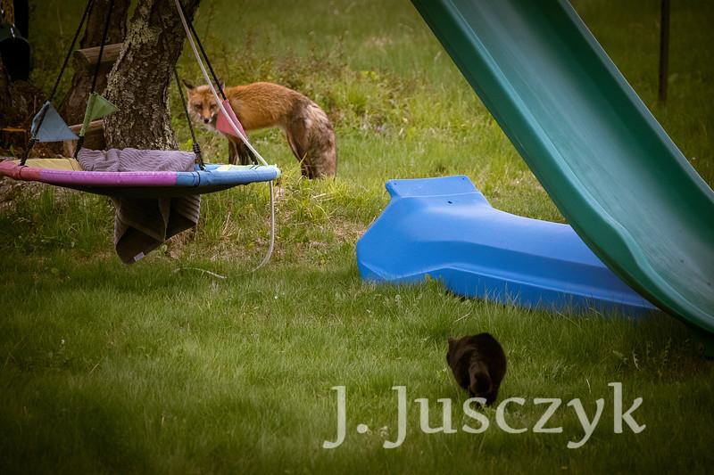 Jusczyk2021-6219.jpg