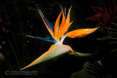 Nature photographs