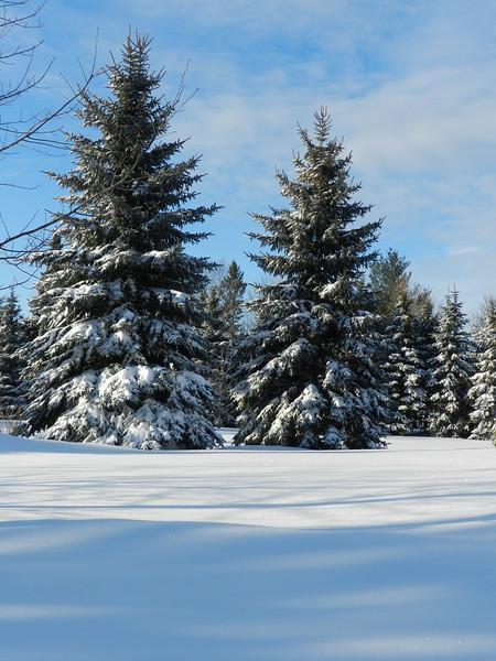 fantastic snow-7148.jpg