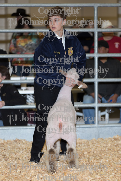 2018 KISD Lamb Show Class 3