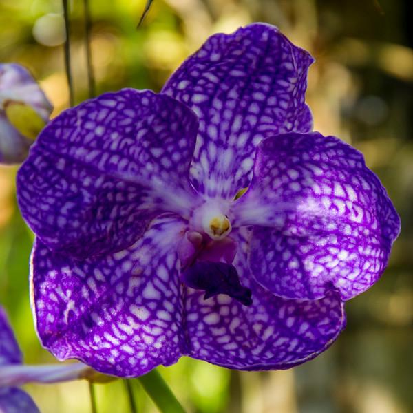 naples_botanical_garden_0053-LR.jpg