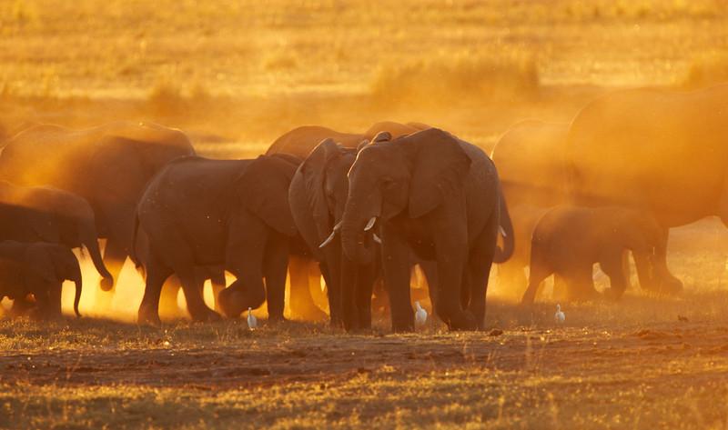 Elephant - 9720.jpg