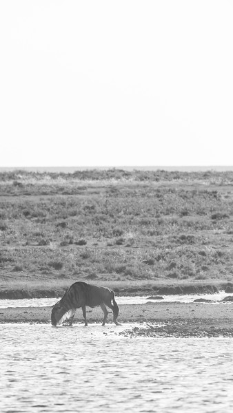 Tanzania_Feb_2018-348.jpg