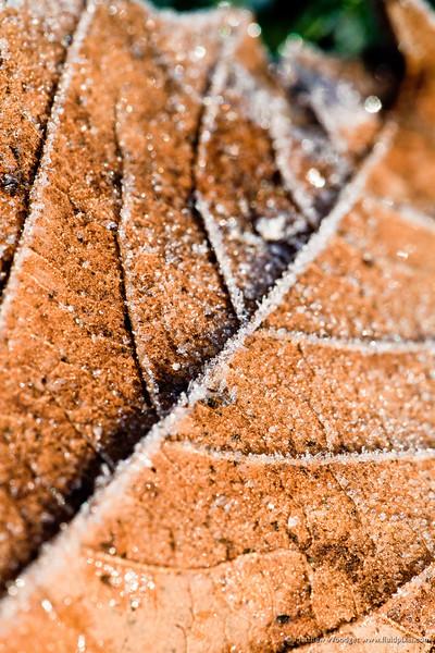 #41 Ice Veins