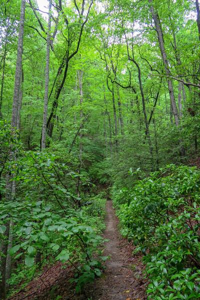Lower Sidehill Trail -- 2,680'
