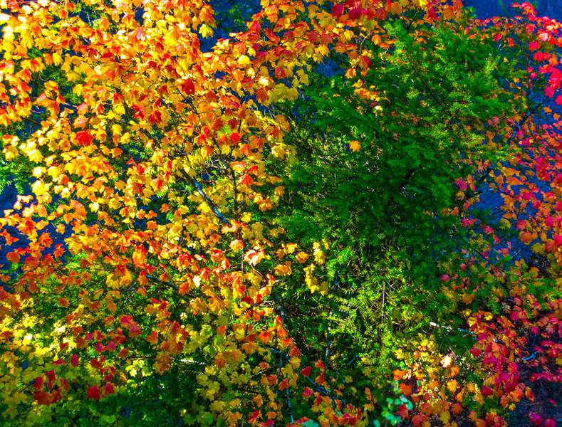 Rogue River_Fall Color-1-Edit.jpg