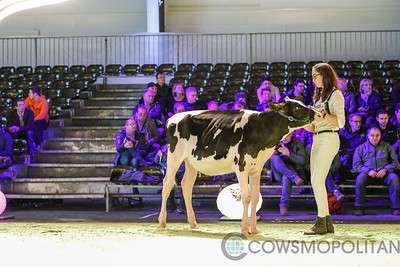 Swiss Expo Holstein Heifers 2018