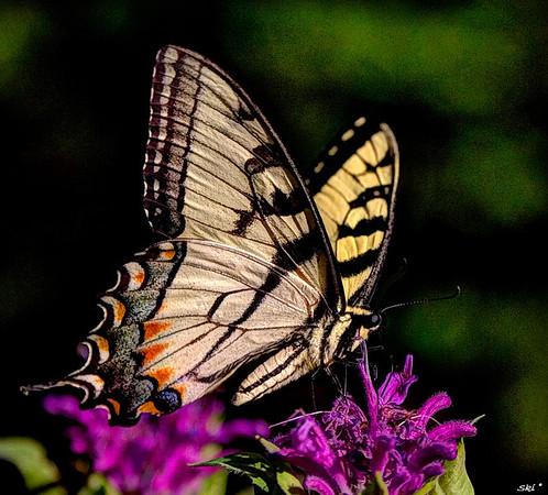 2013 - Butterflies